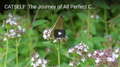 The Journey of All Perfect Creatures